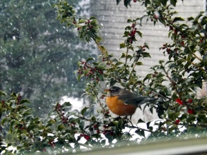 Our friend, the Robin, comes to visit again...even in snow.